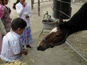 papi feeding the horse