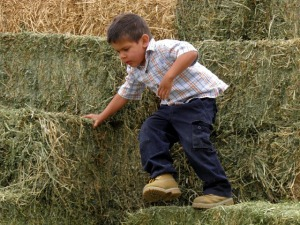 papi on the haystack